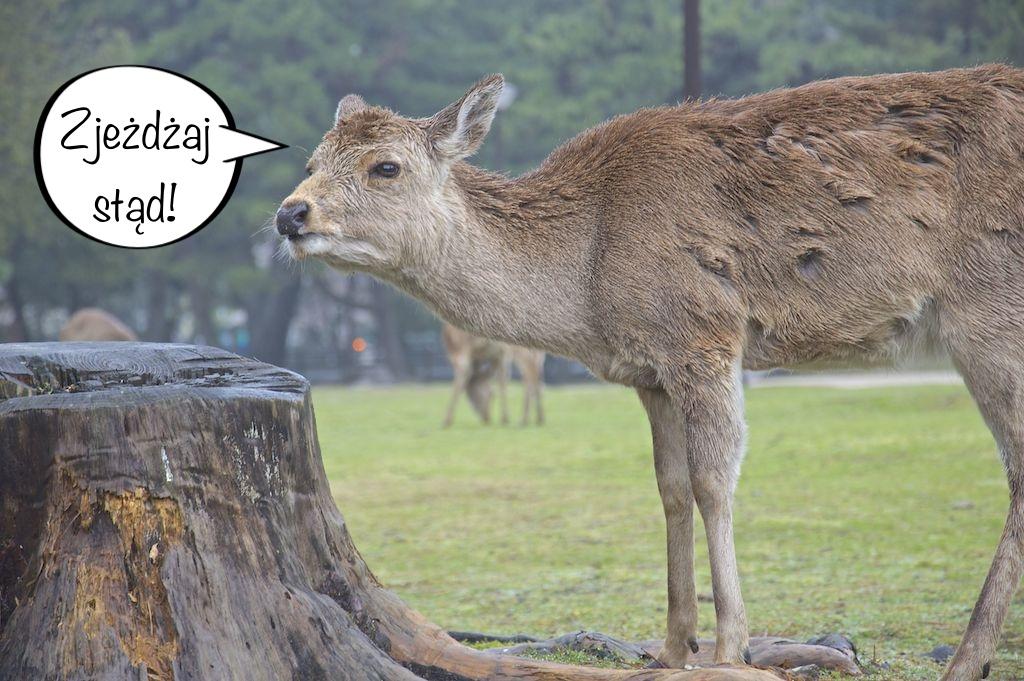 jelen-nara-zjezdzaj